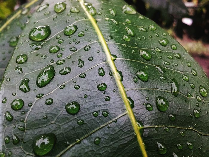 Macro shot of water drops on leaf