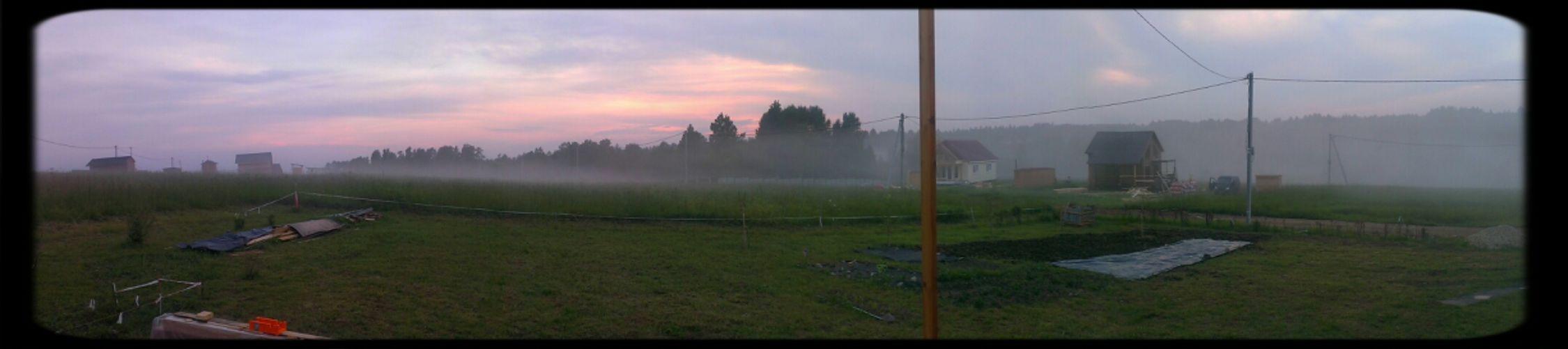 Forest Summer Evening Fog