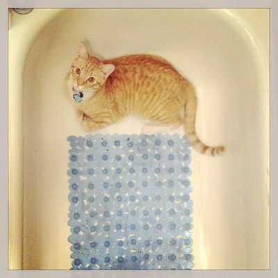 """The second addition to my Cat in Bathroom series titled """"Gato y Bano"""""""