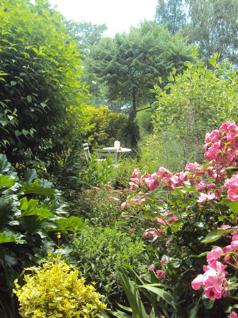 PINK FLOWERING PLANT IN GARDEN