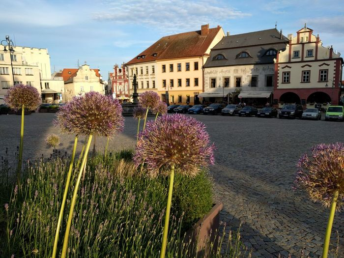 Tábor CZ Flower Cloud - Sky Architecture Building Exterior Sky Outdoors Day No People Close-up Flower Head Nature Market Square Old Town Old Town Square Sunmer Eve
