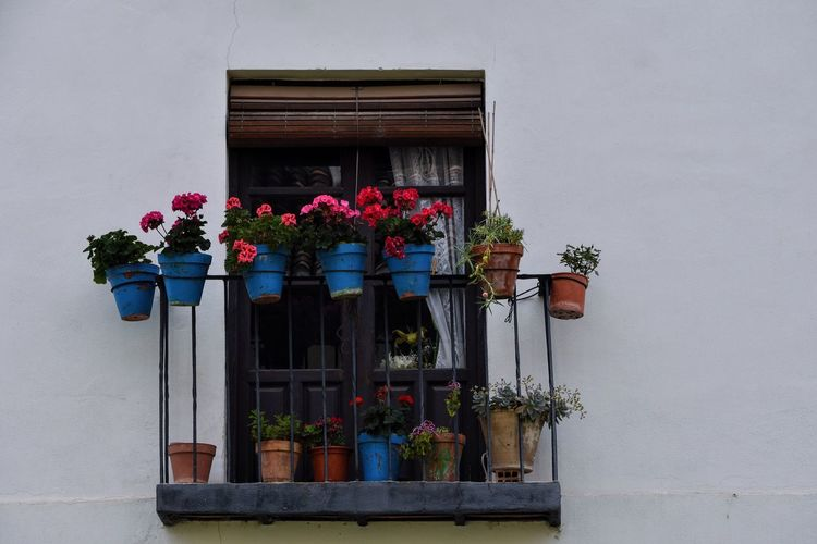 Low angle view of potted plants