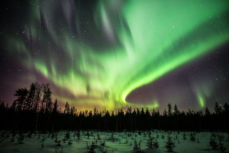 Arctic magic Beauty In Nature Night Snow Winter Sky Cold Temperature Green Color Star - Space Astronomy Tranquility Tranquil Scene No People Nature Aurora Polaris Northern Lights Landscape Photography Scenics Travel Arctic Weather Check This Out Hello World Hanging Out Outdoors