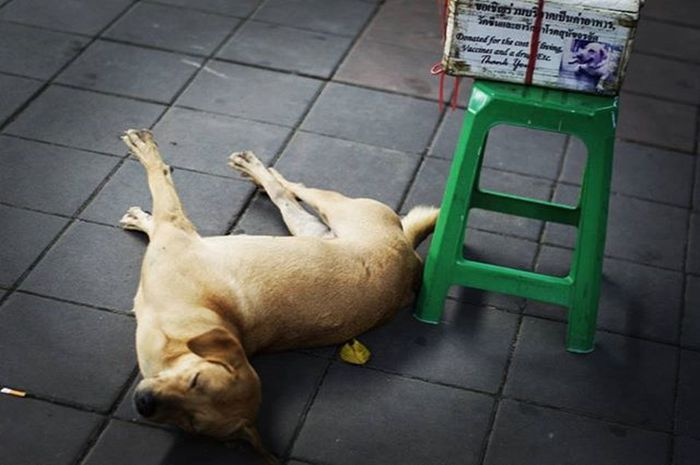 Beggingdog Needatip Dog Animals Sleepingdog Streetphotography Bangkok