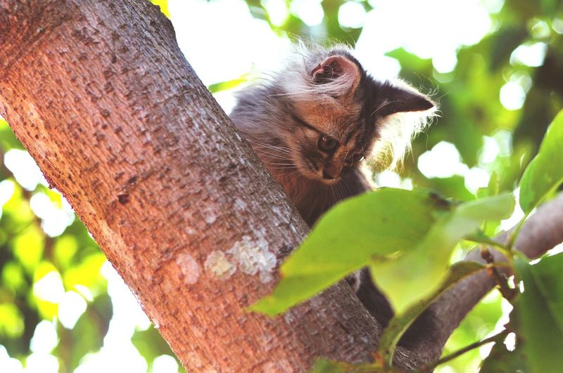 Animal Themes Persian Cat  Cat Lovers Cats Of EyeEm Cats 🐱 Cat Kitten Kitten 🐱 Tree Tree Trunk Close-up