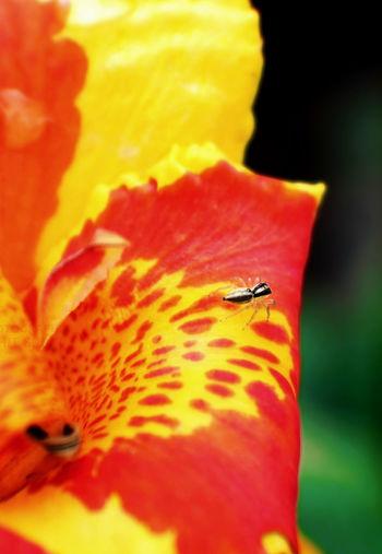 Life... Flower