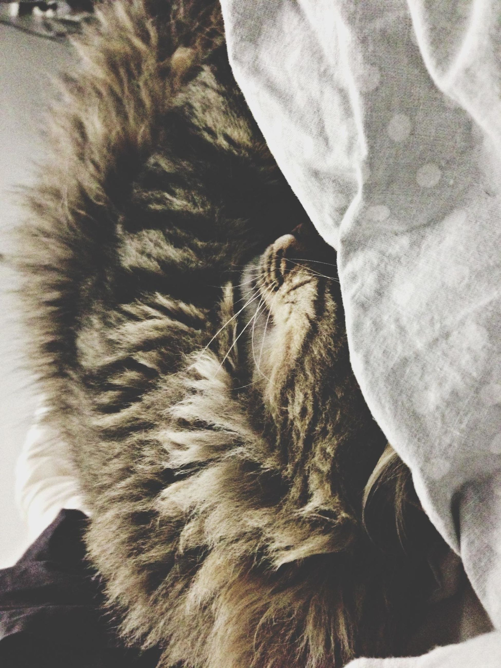 domestic cat, animal themes, cat, one animal, mammal, feline, pets, domestic animals, indoors, whisker, relaxation, resting, high angle view, sleeping, close-up, lying down, animal head, animal body part, no people, part of