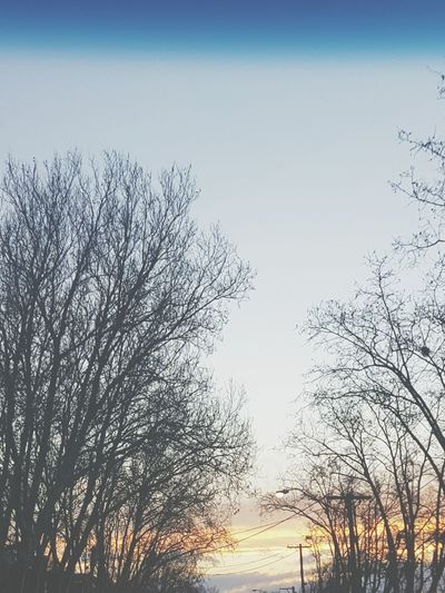 If Trees Could Speak Nature Tree Sky Outdoors Sunset Beauty In Nature EyeEm Selects WeekOnEyeEm EyeEm Best Shots EyeEmBestPics Urban Skyline EyeEmSelect Eyem Gallery EyeEm Nature Lover Beauty In Nature Melbourne