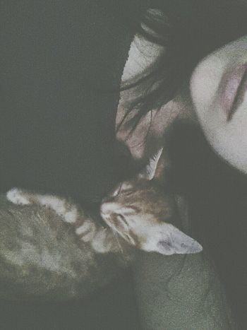 aw so sweet Kitten Falling Asleep Lot Of Love Cat