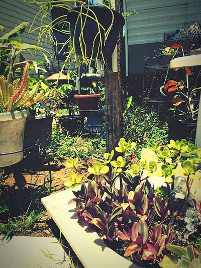 Enjoying Life Doghairstudio Gypsy Girl Brevard's Best Gypsylife In My Garden