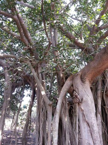 Jungle Nature Eyembestshots Eyem Best Shots Eyem Nature Lovers  Getting Inspired Exploring Woods Greenery Backyard Silhouette