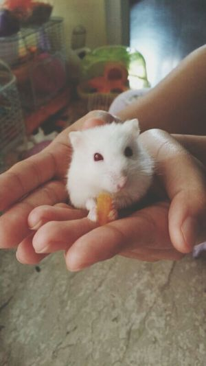 Hamster Hamster Love Good Things Come In Small Packages With Lightcase