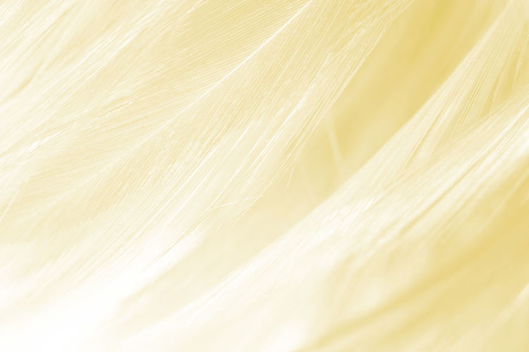 Backgrounds Full Frame Textured  No People Close-up Extreme Close-up Freshness White Color Selective Focus Nature Abstract Pattern Yellow Macro Softness Beauty In Nature Plant Textile Copy Space Natural Pattern Abstract Backgrounds Textured Effect