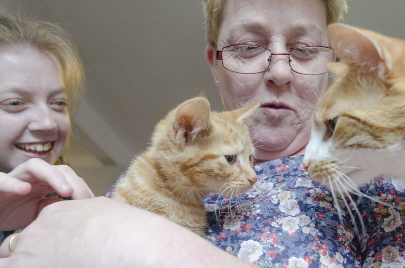 Low angle view of grandmother and granddaughter playing with ginger cats