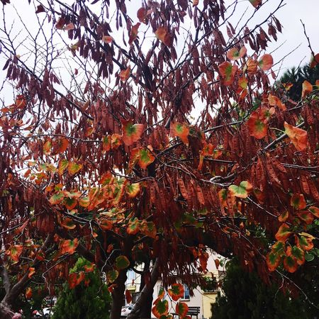 Colorfultree