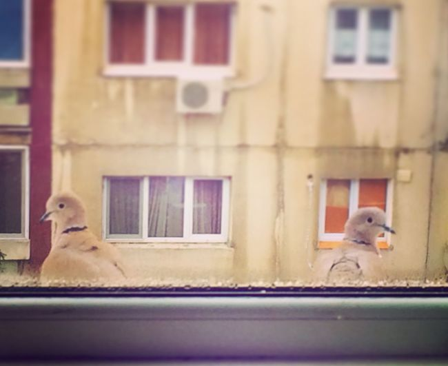 Doves Lovers