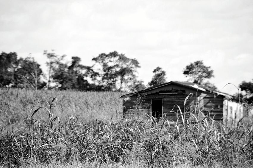 Photosafari Saturday(last week)!! Taking Photos Daylight South Louisiana No People For The Love Of Photography Black And White Photography Wooden Structure Shed Wood Texture Trees Tall Grass Field