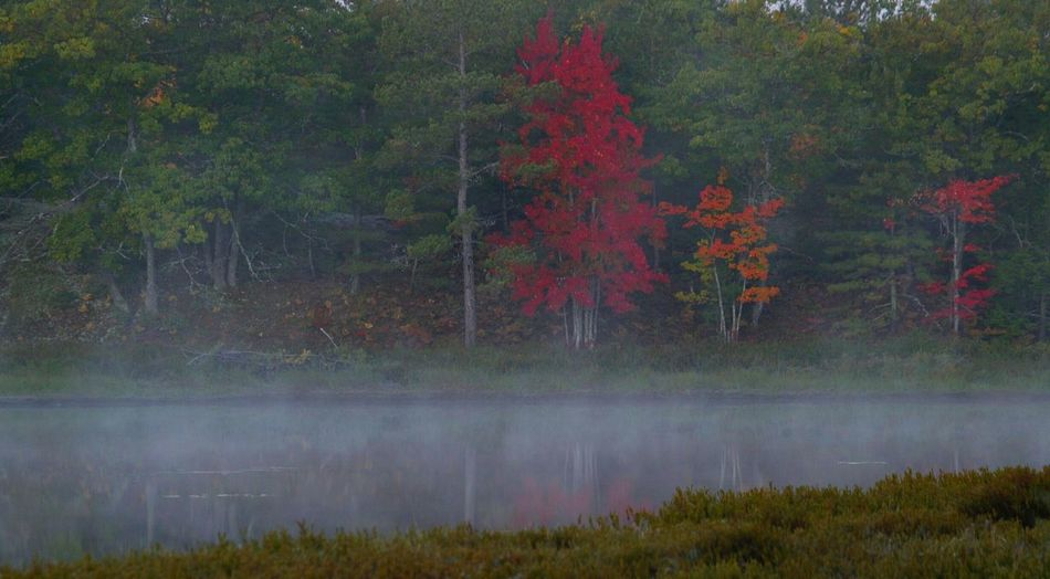 Foggy Pond Reflections Pond Fall Colors Trees And Nature Red Color Green Color