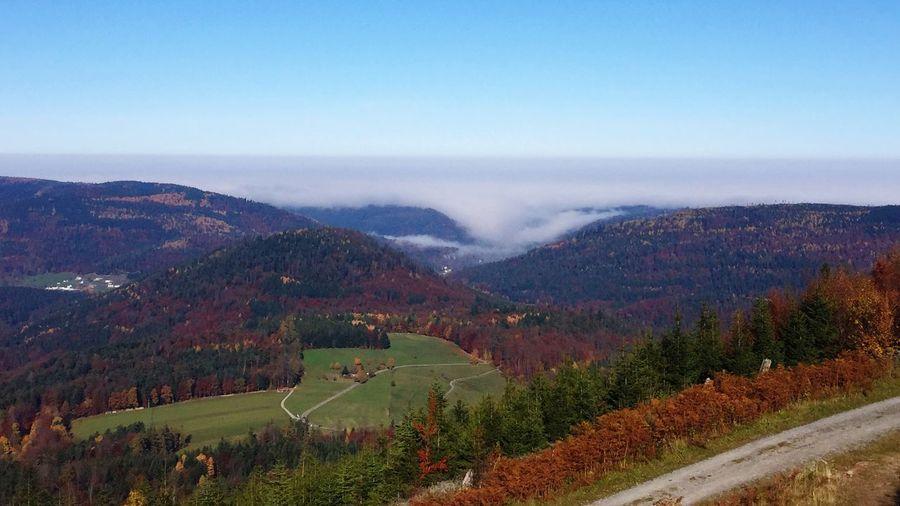 Autumn Autumn Colors Nebel Schwarzwald Black Forest Daswasichsehe😊 Tadaa Community EyeEm Deutschland GERMANY🇩🇪DEUTSCHERLAND@