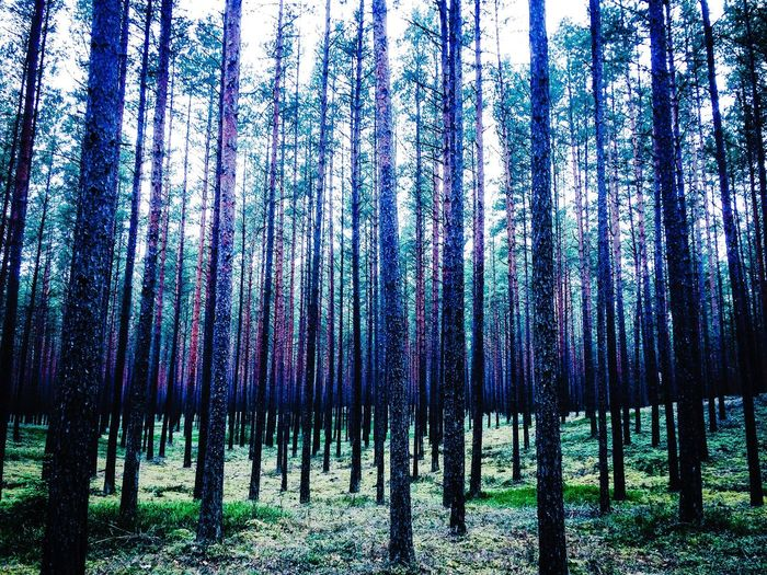 Forest commotion Nature Forest Lithuania Lekėčiai.