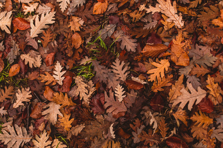 High angle view of maple leaves on fallen tree