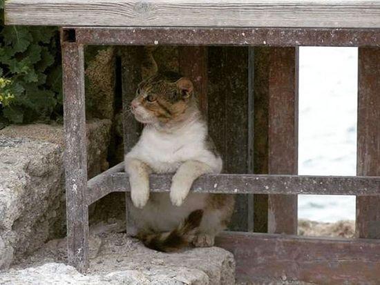 Cat Catslover Rhodes Kos Mykonos Santorini Crete Cyprus Paros Athen Greece Architecture