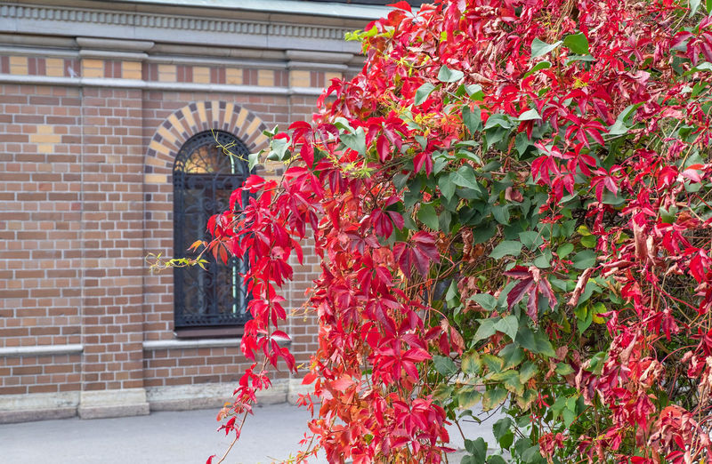 Red flowering plant against building