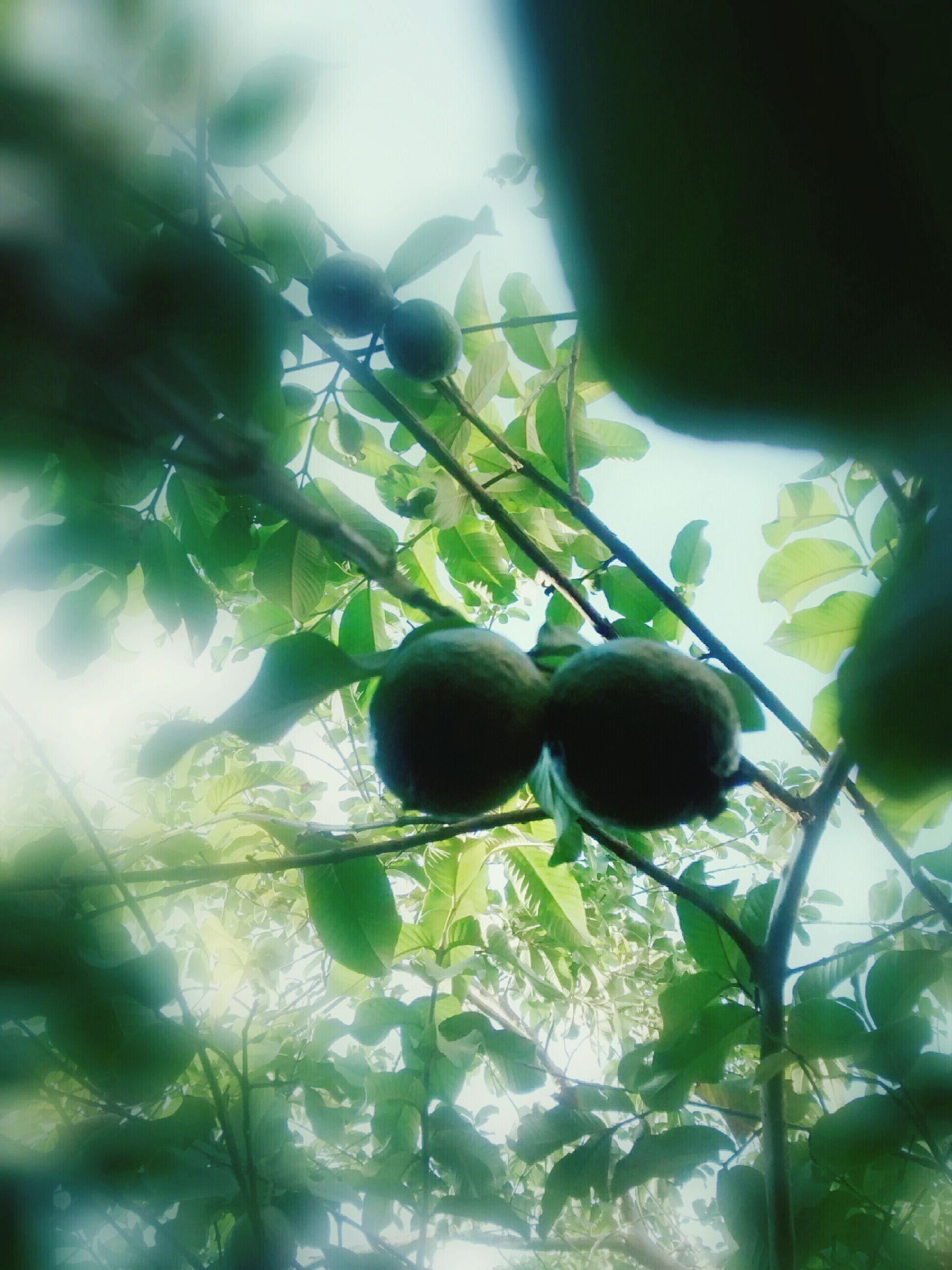 Nature Fruit Delicious Fresh