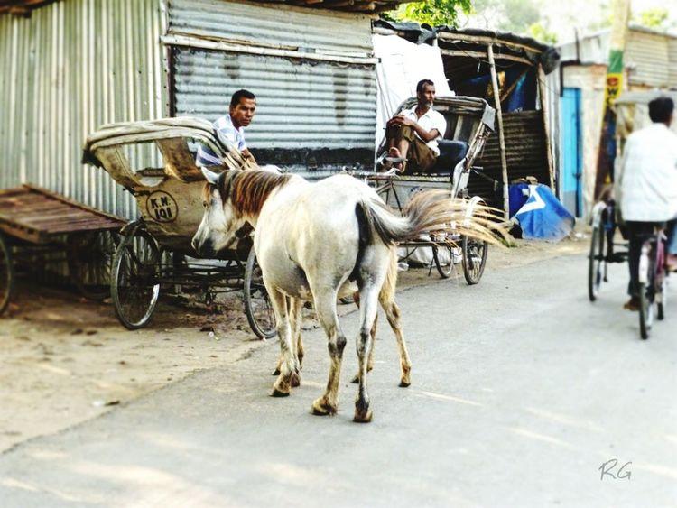 Street Men Animal Donkey India WestBengal Streetsofindia First Eyeem Photo
