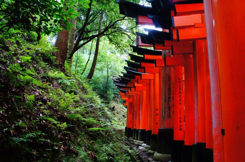 Red Tree Architecture Built Structure Outdoors No People The Way Forward Building Exterior Day Nature Beauty In Nature Spirituality