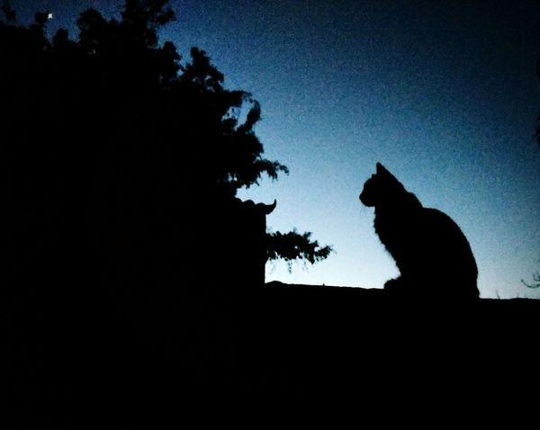 Cats enviroment Cats Of EyeEm Catsofinstagram Catsoftheworld Shadows & Lights Silouette & Sky Pet Portraits Pet Photography  Eyeem Market Pet Models Cat Lovers Tree Baboon Statue Silhouette Sky Bat - Animal Planetary Moon