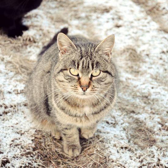 зима Nature Cat Nice