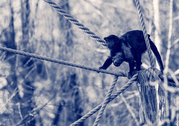 We Are Family Monkey Animals Monkeys Bnw