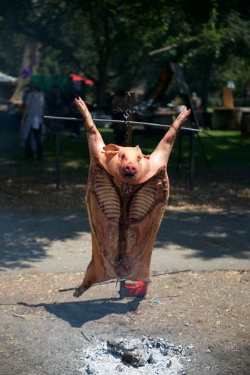 Pork On Hanging On Metal Being Roasted Outdoors