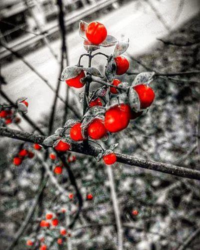 OrangeKiss Berries Natureornothing Loves_nature Ig_addicts_fresh Fiftyshades_of_nature Snapshots_daily Eye_for_earth Picturetokeep_nature Ajl_rural Momentsinnature Tv_editz Igers_of_wv Wv_igers Everything_imaginable Eliteeditzz