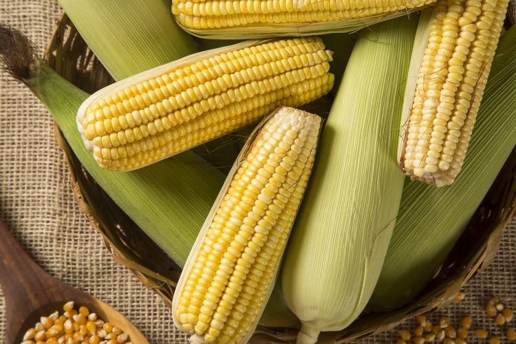 Ear of corn,