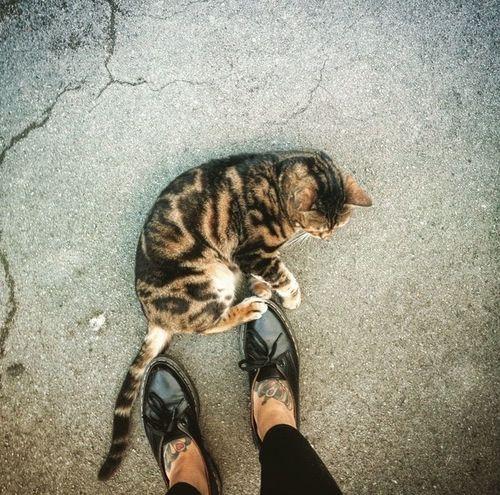 Cat Tiger Love Tattoos Feet Drmartens