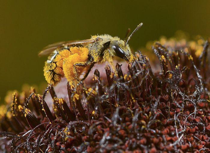Macro shot of bee pollinating on flower