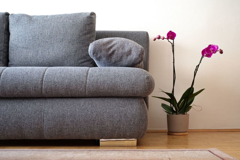 Close-up of potted plant on sofa at home