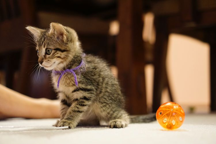 Selected For Partner EyeEm Selects Animal Animal Themes Mammal Domestic Cat Cat Feline No People Vertebrate Young Animal Indoors  Domestic Looking Away Domestic Animals Looking Pets Focus On Foreground Close-up Kitten Sitting One Animal