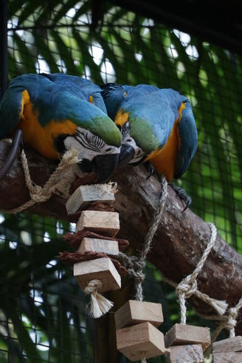 View of birds perching on wood