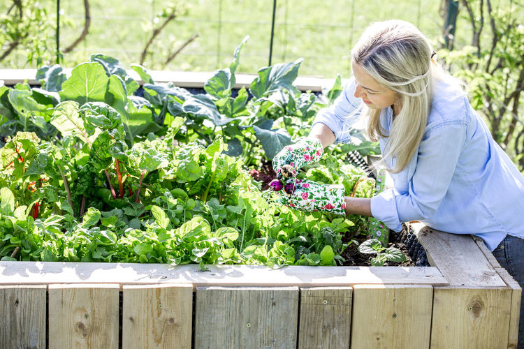 Woman gardening in wooden container at backyard during sunny day