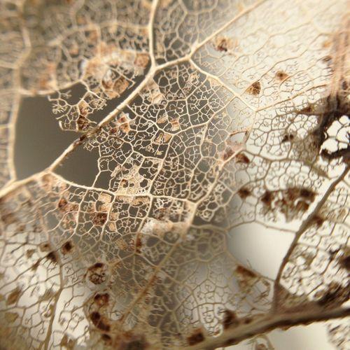 Macro leaf Olloclip_macro Macro Olloclip