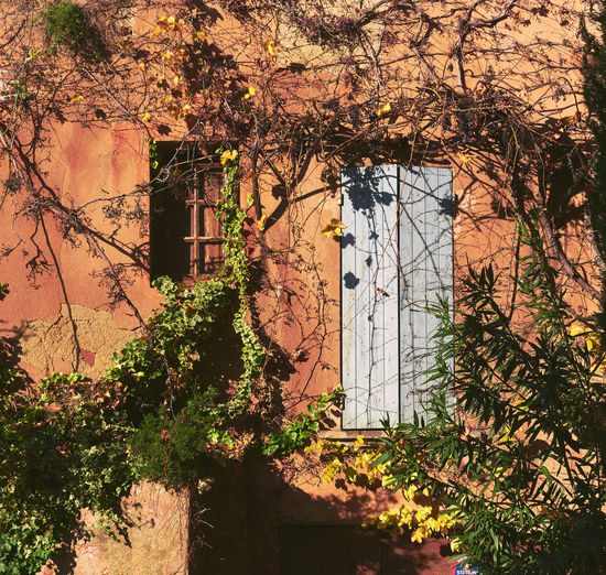 Old building covered with a yellowed ivy. Small window and obsolete white door. Retro styled. Roussillon village. France Autumn Autumn Leaves Branch Building Exterior Built Structure Day Foliage France Growth Home Ivy Ivy Covered Ivy Leaves Ivy Wall Leaf Nature No People Obsolete Outdoors Plant Roussillon Season  Tree Wall Yellowed Leaves