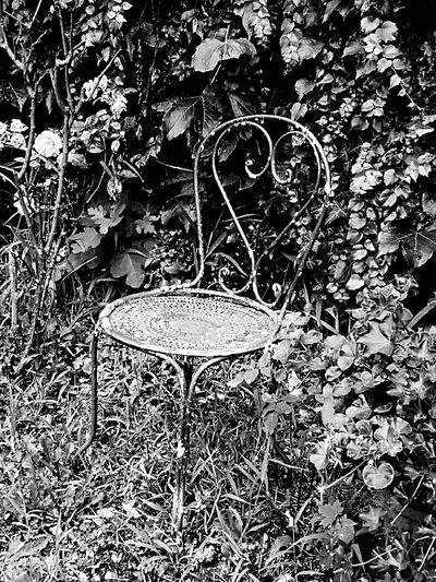 No People Outdoors Nature Garden Decor Iron Chair Old Chair Iron - Metal Black And White Black And White Photography