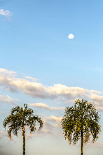 Beauty In Nature Blue Cloud Cloud - Sky Cloudy Day Full Moon Moon Nature Palm Tree Sky Tranquility Tree Tree Top Treetop