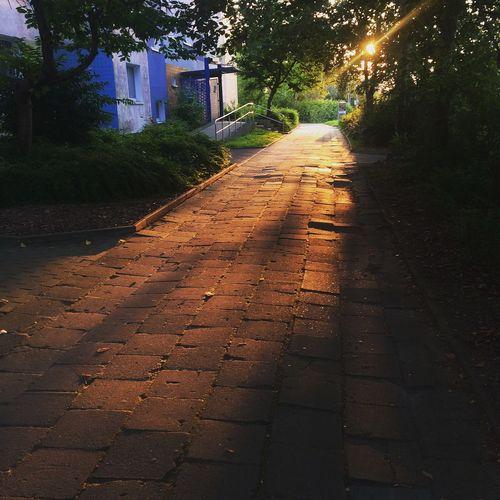 Sunset season in the ghetto Rostock Hansestadt Rostock Lichtenhagen Sunset Intheghetto Evening Light Golden Hour