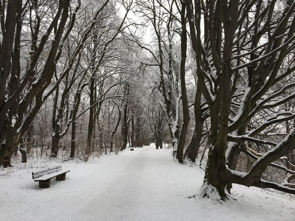 Way into the winter, Snow, Park,trees, Forest, Bank, Through The Winter Through The Snow Way Snow Winter Cold Temperature Nature Tree Bare Tree Tranquility Beauty In Nature Tranquil Scene Outdoors No People Landscape Sky Day