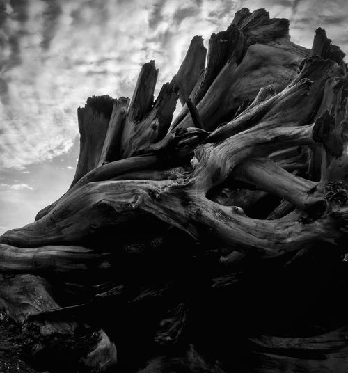 Driftwood black and white stump on beach Driftwood Beach Photography Beach Beachphotography Beach Life Beachlife Victoria Bc British Columbia Showcase: February Blackandwhite Black And White Black & White Blackandwhite Photography Sky Skyporn Sky And Clouds Clouds Clouds And Sky