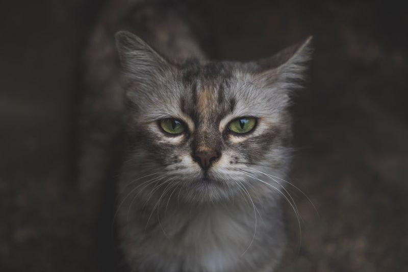 Close-up portrait of cat standing on field